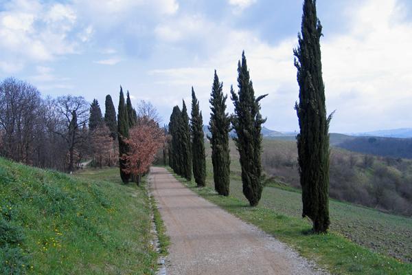 Parco collinare e giardino di Canonica 4